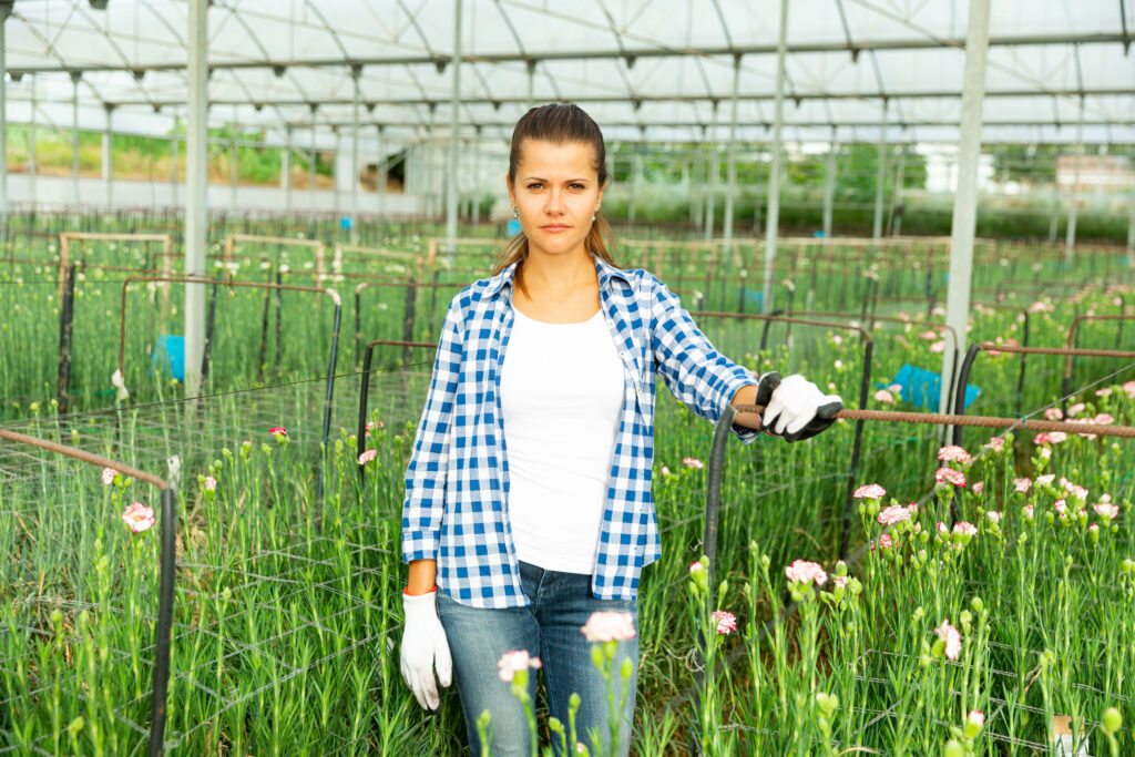 Portrait of young woman working with  carnation flowers  in greenhouse