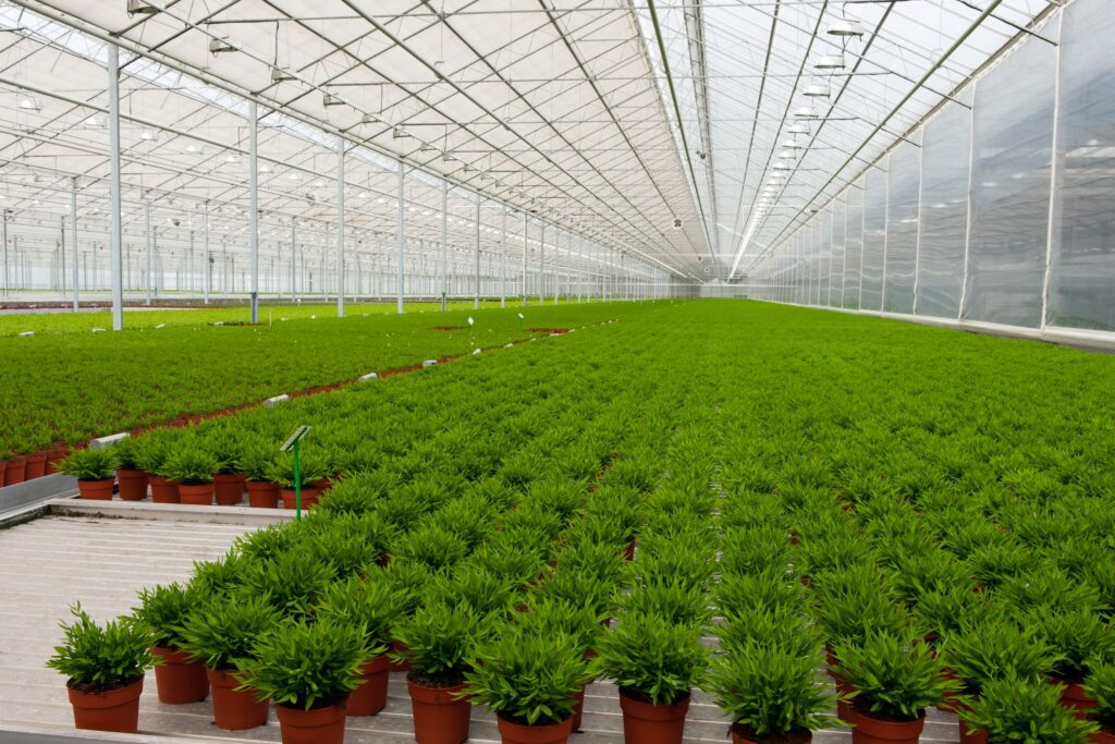 7934363 - interior of a greenhouse with many bamboo plants
